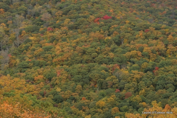 Changing colors on the Blue Ridge Parkway near Asheville, North Carolina
